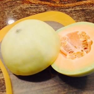Orange Delicious Melon